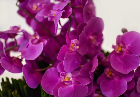miami-always-flowers-photos