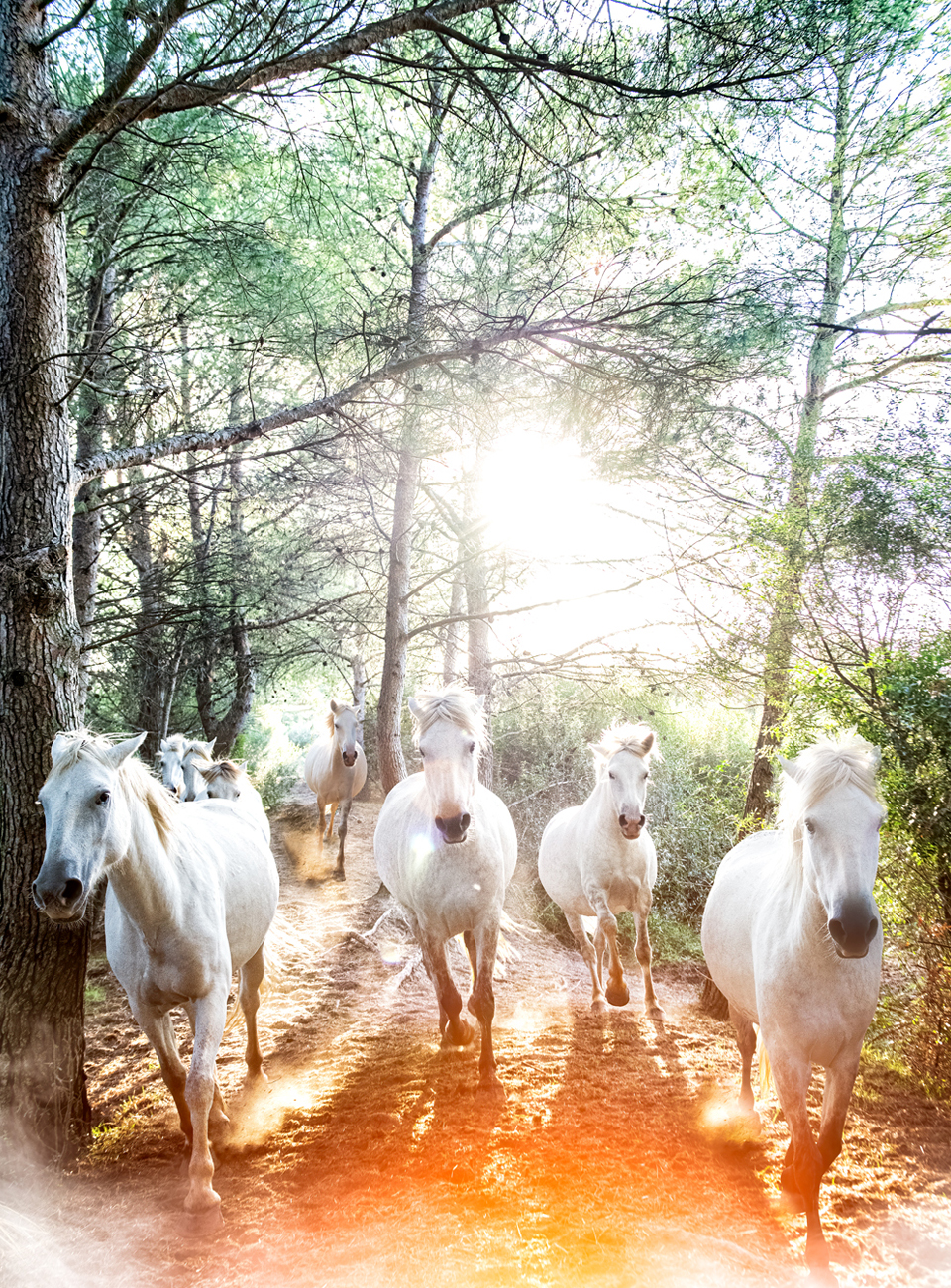 mist-of-camargue-horses