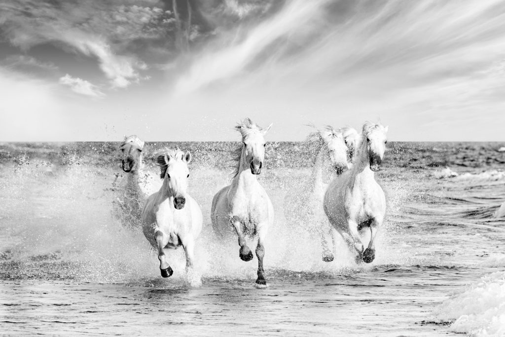 white-horses-camargue-photo