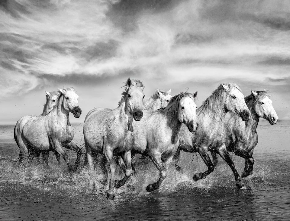 the-white-horses-of-camargue-photography